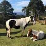 _cavalos_lahacienda